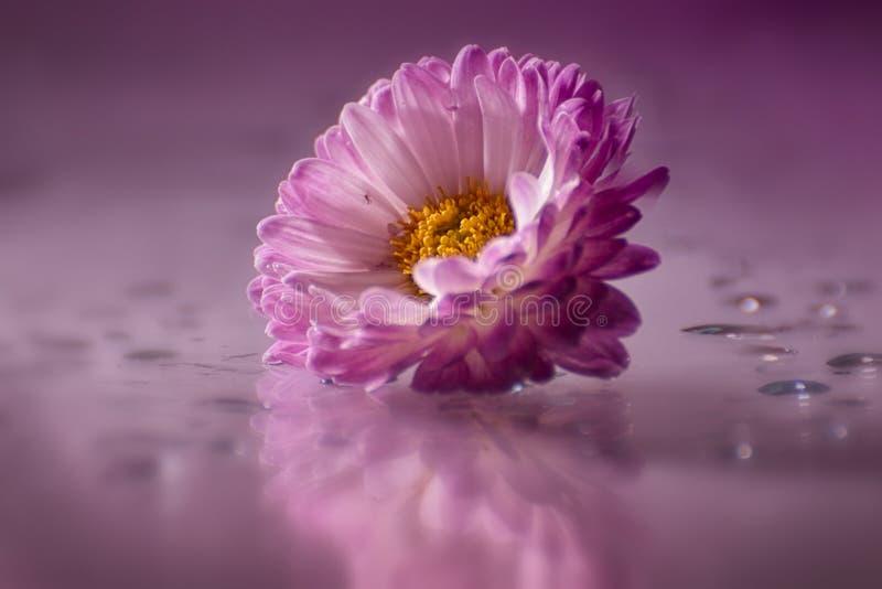 Reizende Blumen lizenzfreies stockbild