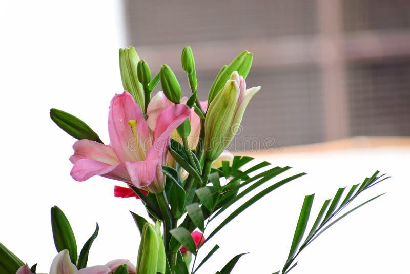 Reizende Blumen lizenzfreie stockbilder