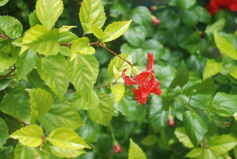 Reizende Blumen in einem Garten lizenzfreie stockfotos