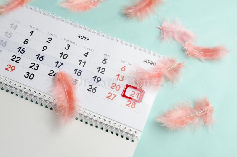 Reizende einfache Zusammensetzung des Kalenders und der korallenroten Federn auf blauer Oberfläche stockfoto