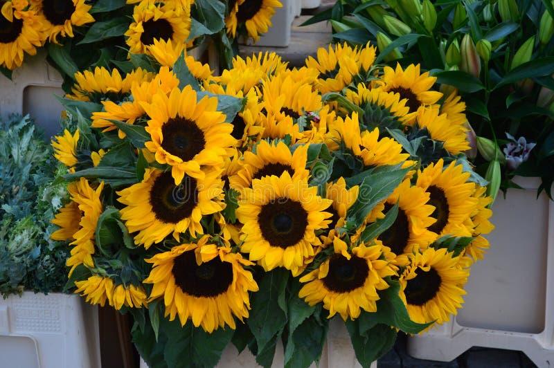 Reizende gelbe Sonnenblumen für Verkauf im Republikquadrat Prag lizenzfreie stockbilder