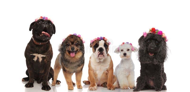 Reizende Gruppe Mischhunde, die Blumen tragen, krönt lizenzfreie stockbilder