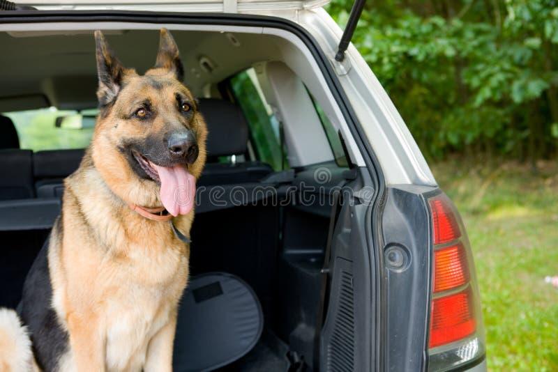 Reizende Hond royalty-vrije stock fotografie