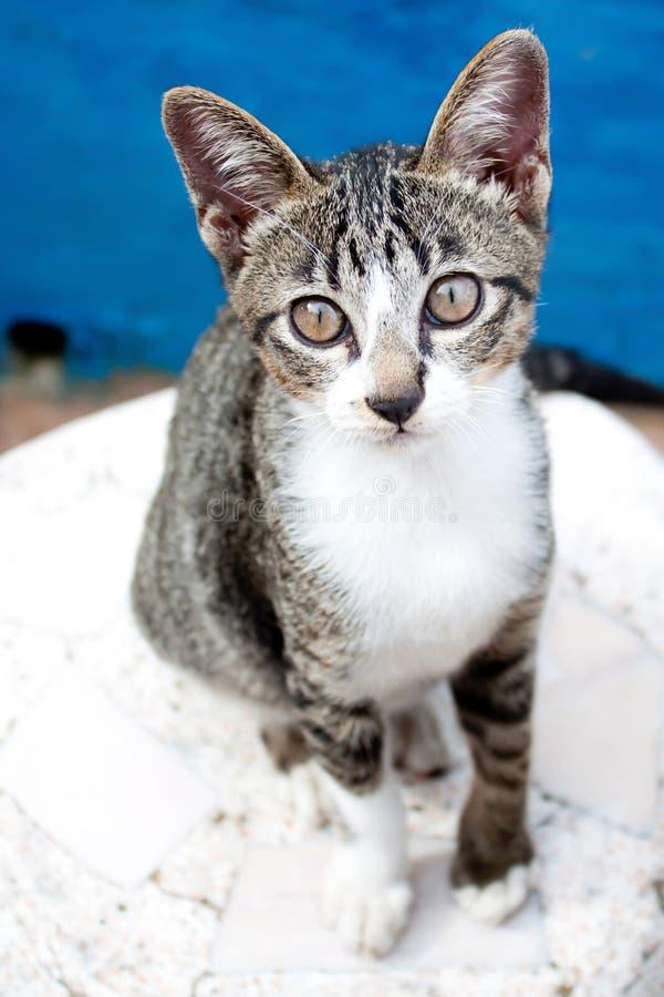 Reizende Katze stockbild