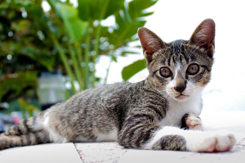 Reizende Katze lizenzfreie stockbilder