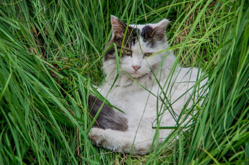 Reizende Katze stockfotos