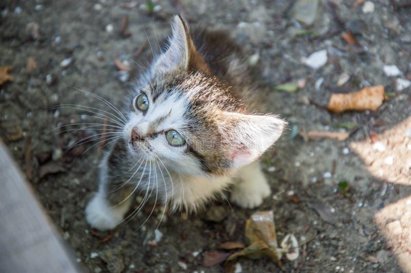 Download Reizende kleine Katze stockfoto. Bild von interessieren - 96928594