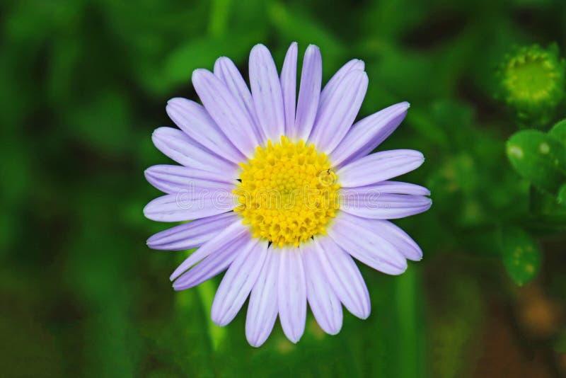 Reizende purpurrote Blume im Stadt-Park stockbilder