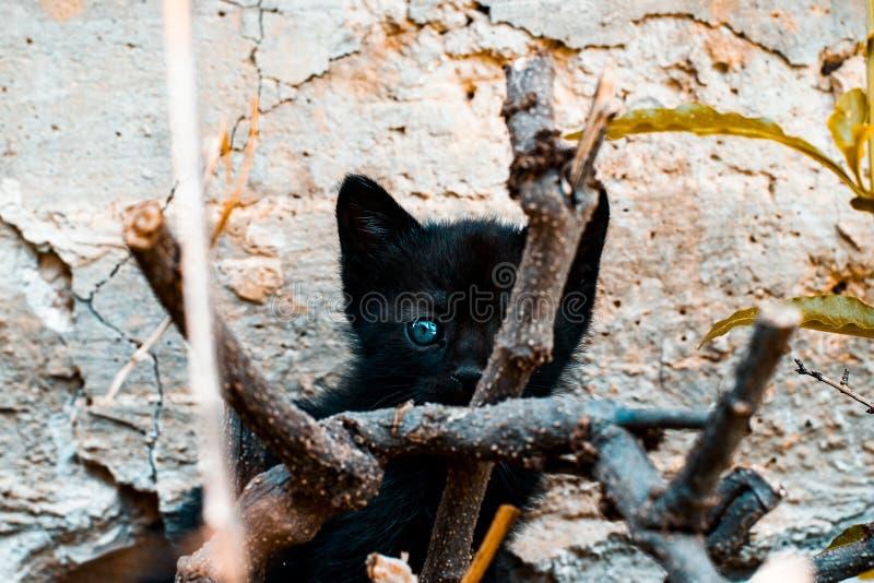 Reizende schwarze Katze stockbilder