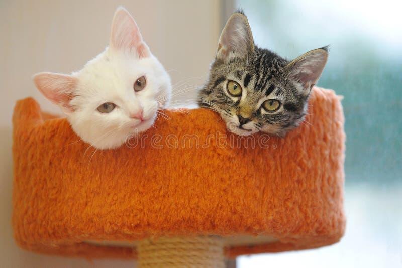 Reizende Schwarzweiss-Katze stockfotografie