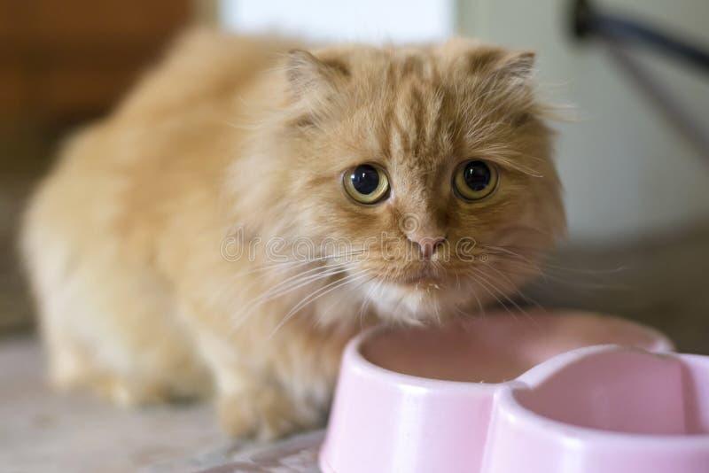 Reizende traurige Katze, die nahe seiner Platte sitzt lizenzfreies stockbild