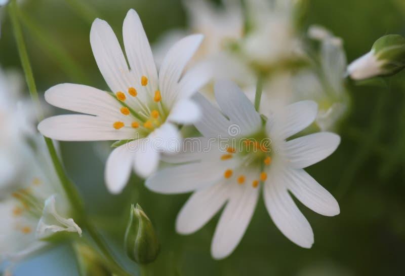 Reizende weiße Blumen stockfotos