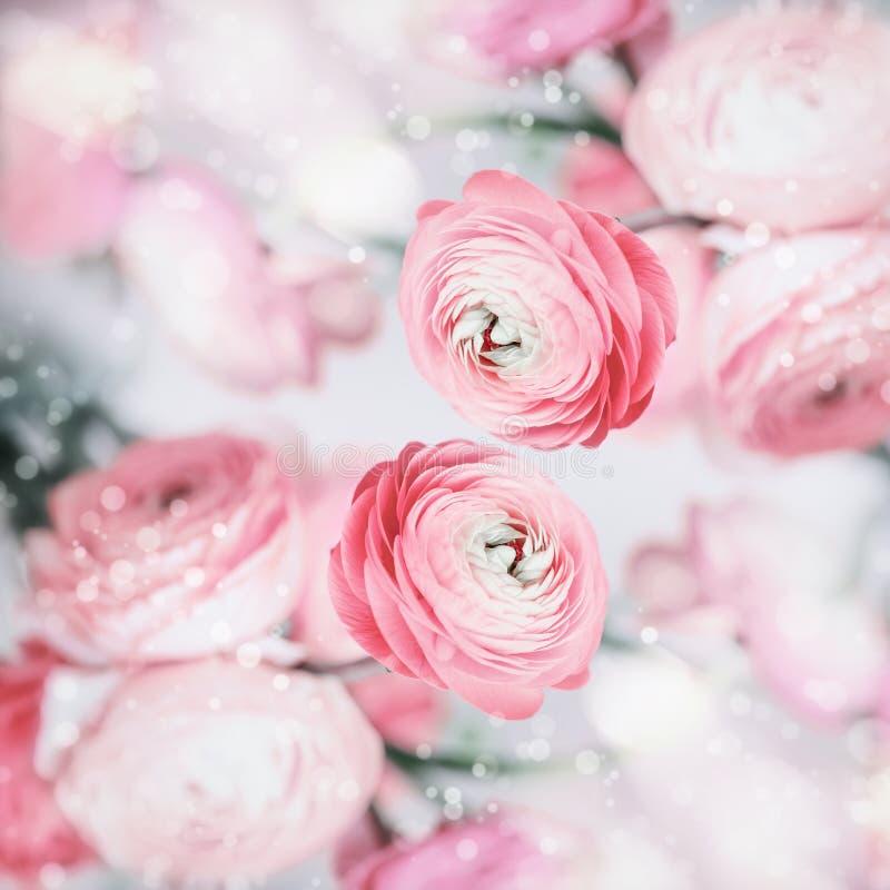 Reizender Blumenhintergrund mit recht rosa blassen Blumen und bokeh lizenzfreie stockfotografie