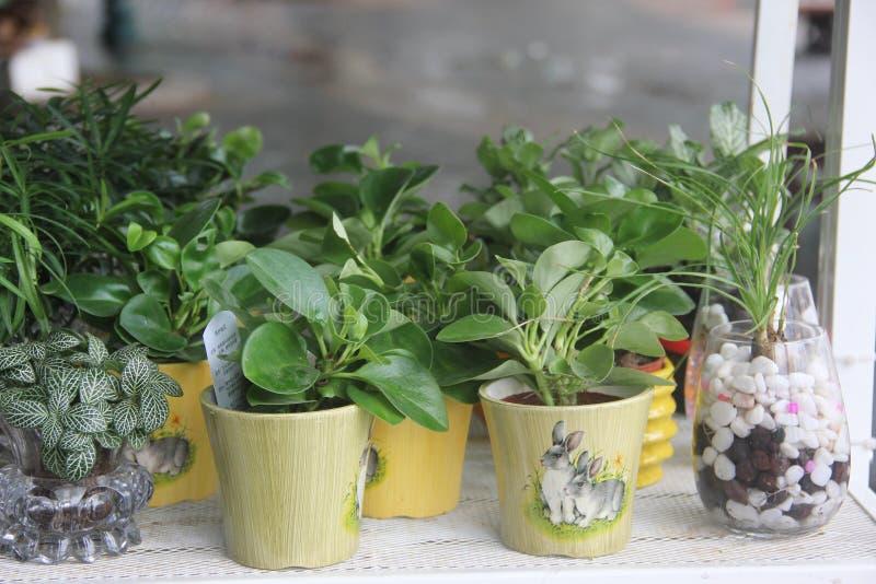 reizender blumentopf und kleine gr npflanzen stockfoto