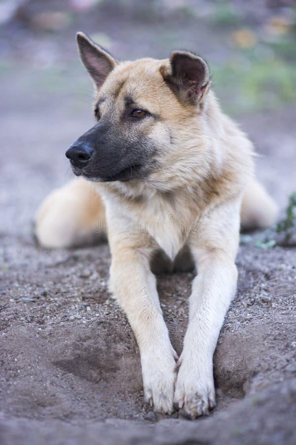 Reizender brauner und weißer Hundenatürlicher Hintergrund stockbilder