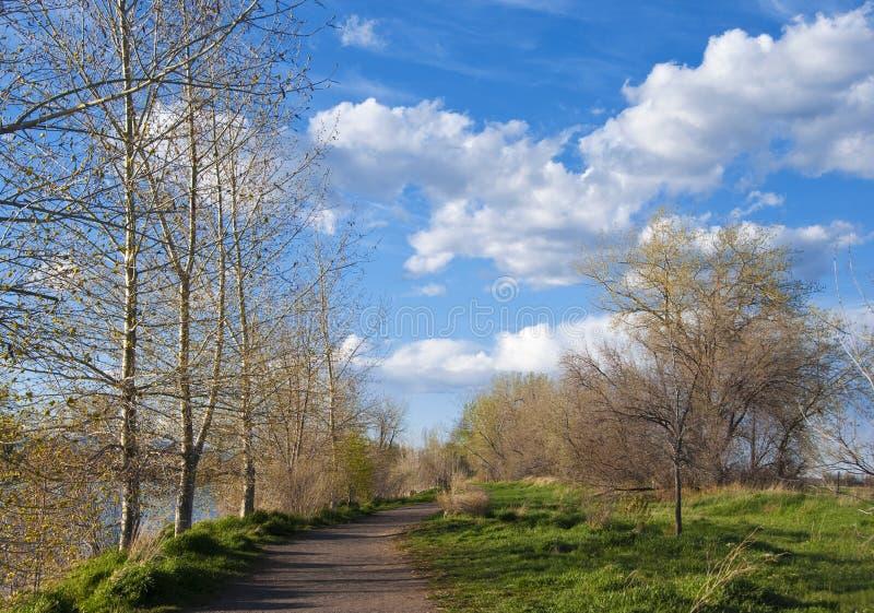 Reizender Pfad und hohe Bäume lizenzfreies stockfoto