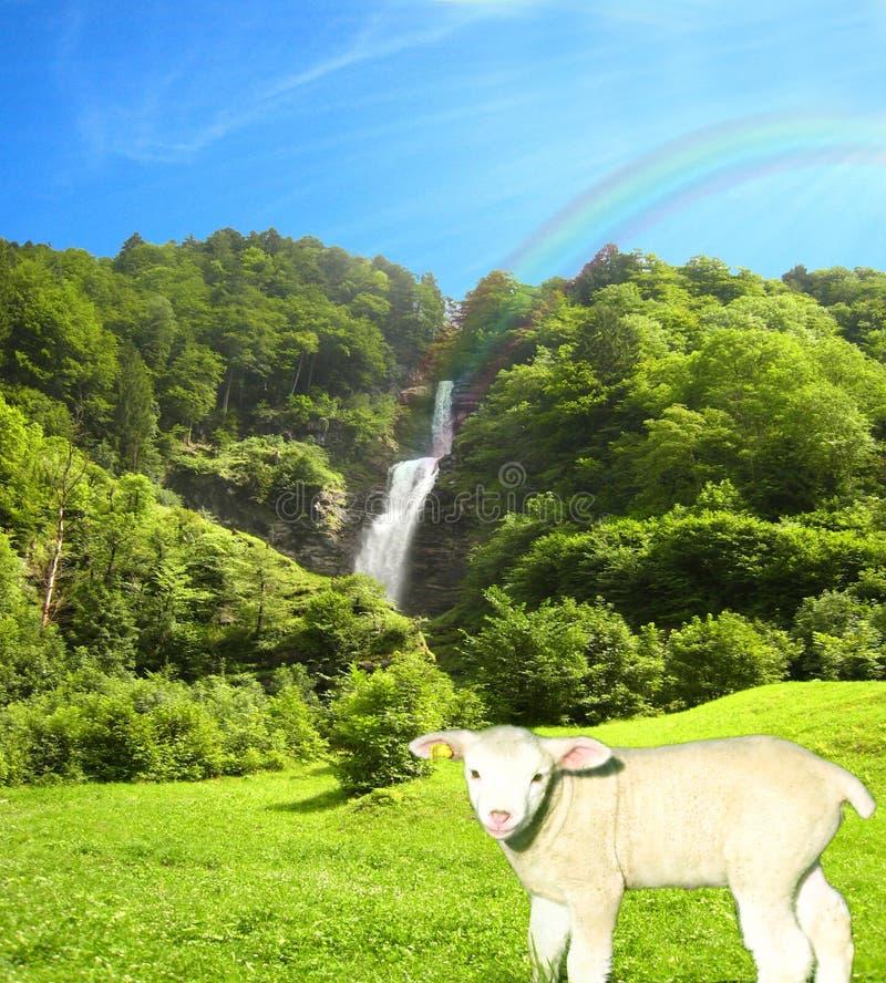 Reizender sonniger Wasserfall an einem hellen Sommertag mit einem netten Lamm und einer schönen Collage des blauen Himmels stockbild