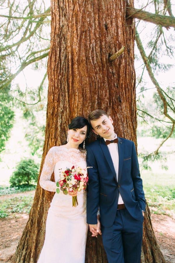 Reizendes Brustbild der lächelnden Jungvermähltenpaare, die Haupt halten und auf dem Baum sich lehnen stockfotos
