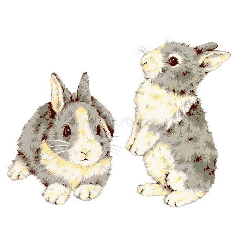 Reizendes Kaninchen stock abbildung