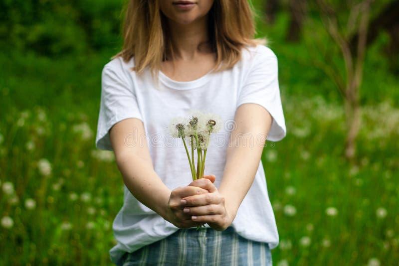 Reizendes Sommerbild eines Frauenholdinglöwenzahns gegen Grashintergrund stockfotografie