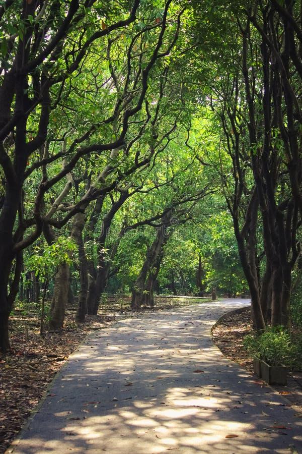 Reizendes thailändisches Forest Park pflasterte Bahn für das Gehen oder das Radfahren stockfoto