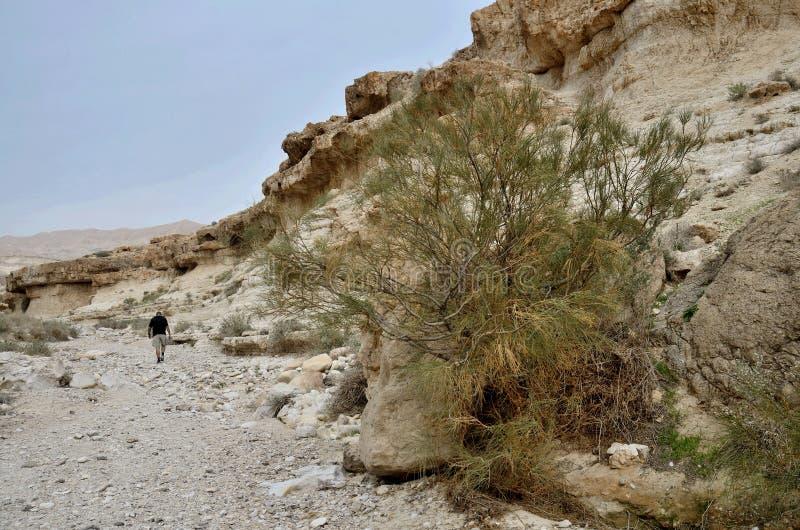 Reiziger die in Wadi Murabba ` bij canion, Judean-woestijn, Israël lopen stock afbeeldingen