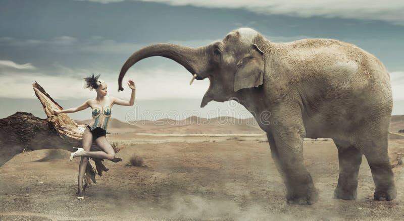 Reizvolle moderne Dame mit Elefanten stockfotografie
