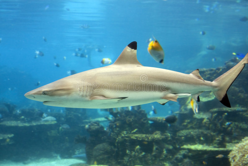 rekin zdjęcia stock