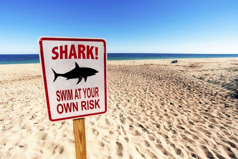 Rekin Namierzony, Pływa na własne ryzyko fotografia stock