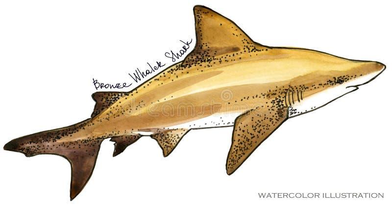 rekin podwodna życie akwareli ilustracja pochodzenie zwierząt kolorów plam Croatia foto ogniska piękną ośmiornice octpous bardzo  ilustracji