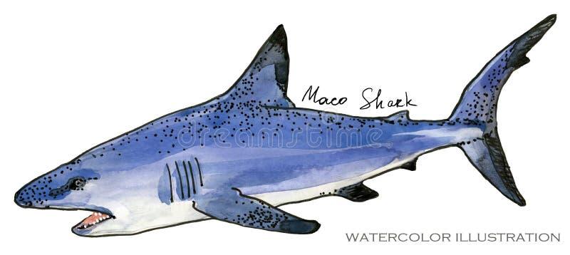 rekin podwodna życie akwareli ilustracja pochodzenie zwierząt kolorów plam Croatia foto ogniska piękną ośmiornice octpous bardzo  royalty ilustracja
