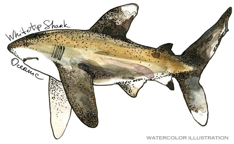 rekin podwodna życie akwareli ilustracja pochodzenie zwierząt kolorów plam Croatia foto ogniska piękną ośmiornice octpous bardzo  ilustracja wektor