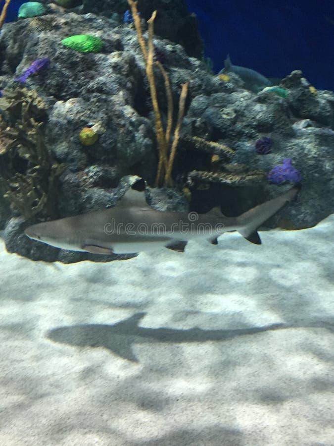 Rekinu odpoczywać fotografia stock