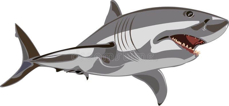 rekinu wielki biel royalty ilustracja