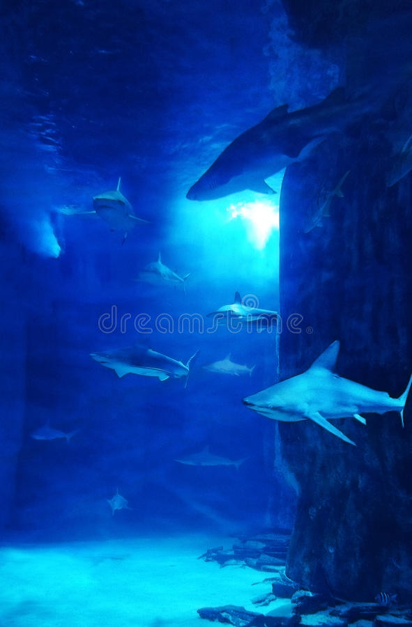 Rekinu zbiornik obrazy royalty free