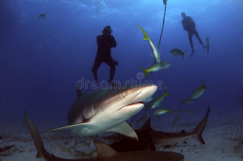 rekiny zdjęcie stock