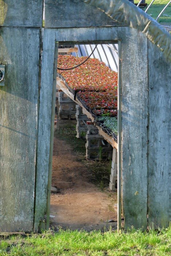Reklamfilmväxter i gammalt växthus arkivbilder