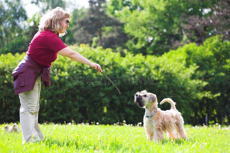 reklamy trawy psa green jej kobieta obraz royalty free