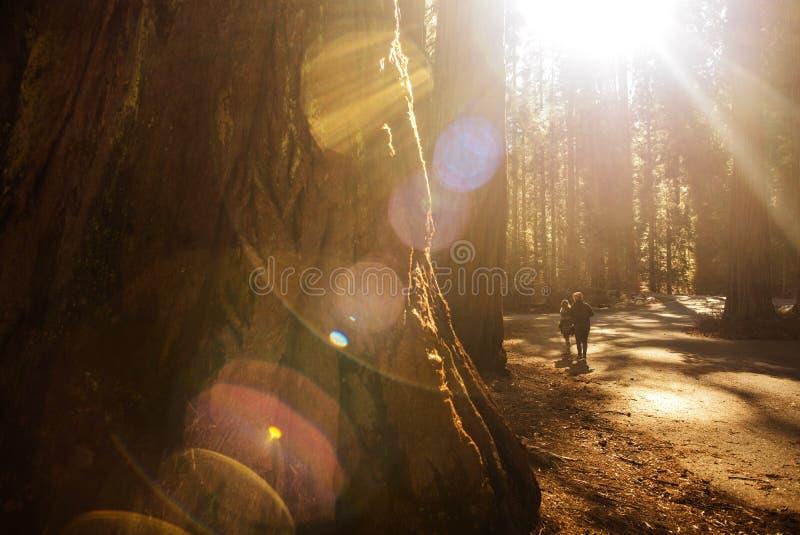 Download Rekonesansowy sekwoja park zdjęcie stock. Obraz złożonej z giganty - 106917196