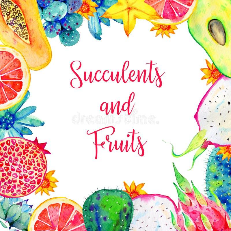 Rektangulär ram med exotiska frukter och suckulenter Avokado pitahaya, citrus, avokado, papaya royaltyfri fotografi