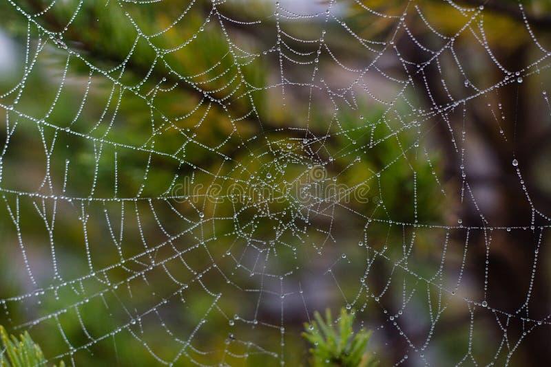 relâche l'eau de spiderweb photographie stock