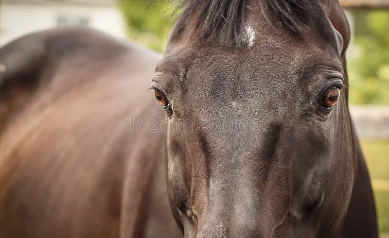 Download Relógio do cavalo de Brown imagem de stock. Imagem de bonito - 65575699