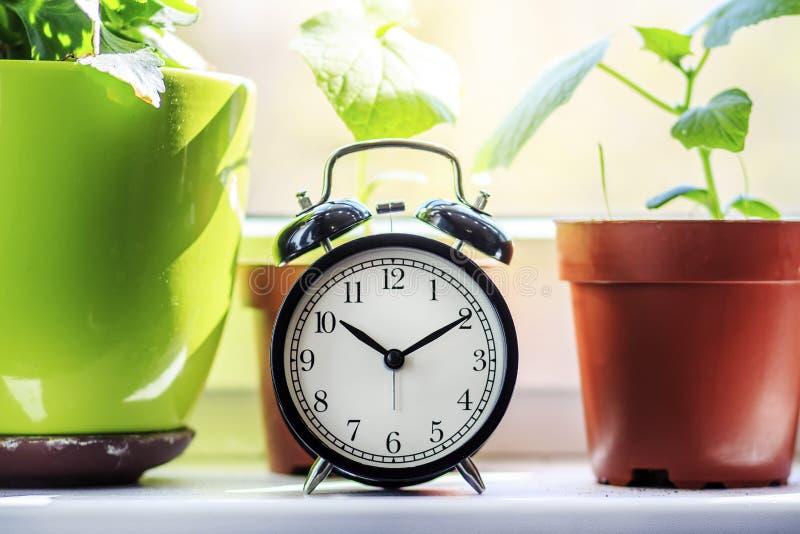 Relógio e flores home na soleira Ele tempo do ` s molhar flores Cuidado para flores da casa imagens de stock royalty free