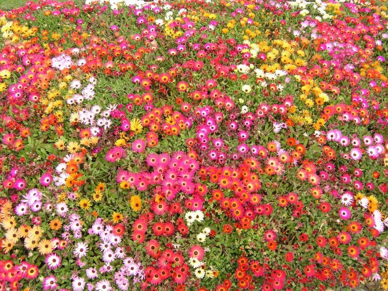 Download Rel van kleur! stock foto. Afbeelding bestaande uit zonnig - 44692
