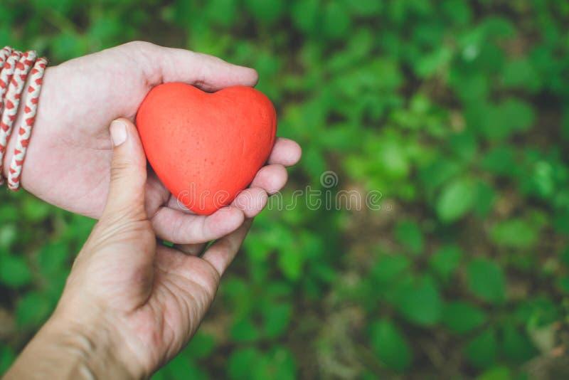 Relación y concepto del amor - femenino y manos masculinas que llevan a cabo el corazón rojo imagen de archivo
