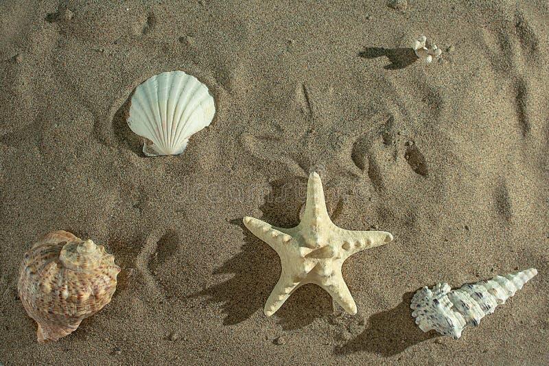 Relajación en la playa en una isla tropical imágenes de archivo libres de regalías