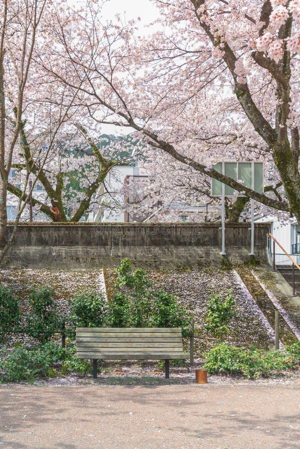 Relaje la hora el banco para sentarse en el jardín con hermoso de la flor de cerezo en la plena floración fotografía de archivo