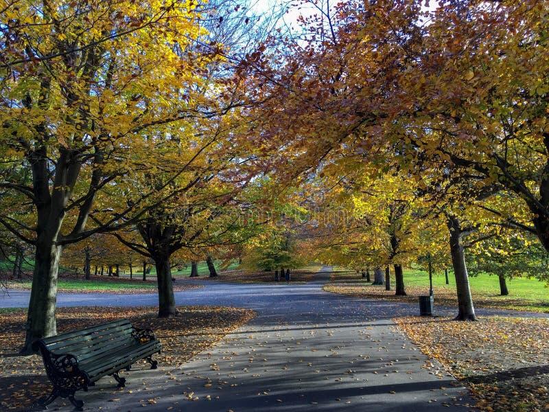 Relaksować parki Londyn zdjęcia stock