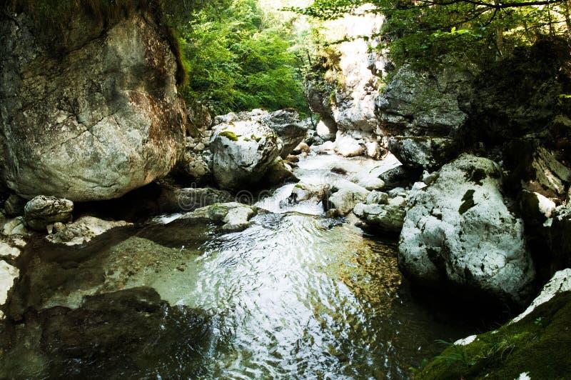Relaksująca rzeka zdjęcie stock