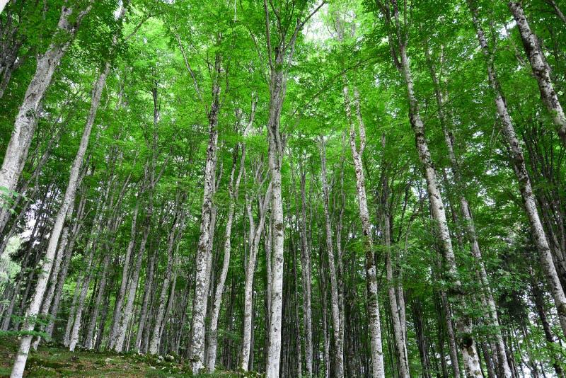 Relaksująca zieleń las obrazy royalty free